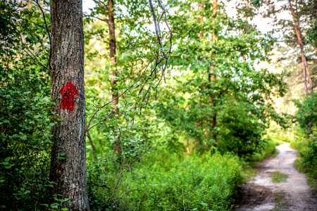 Red pointing arrow on a tree among the forest against the background of a path bathed in sunlight.