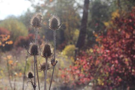 Bur on the autumn nature background. Autumn landscape photography.