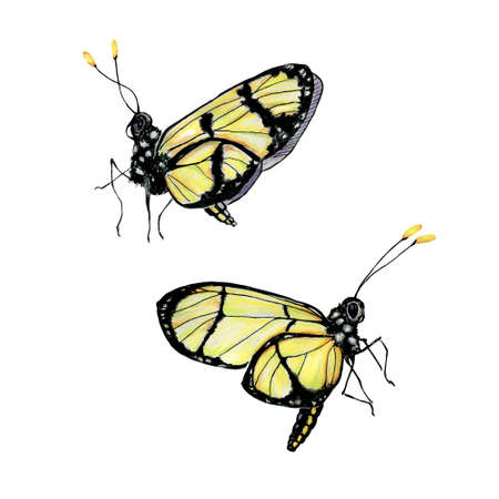 yellow butterfly: Set of two watercolor yellow butterfly