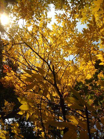 autumn leaf nature tree yellow