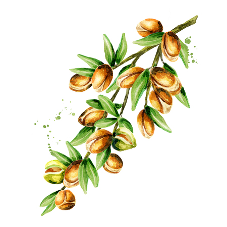 Branch of the argan tree, can be used as a design element for the decoration of cosmetic or food products using argan oil. Hand-drawn watercolor sketch Foto de archivo