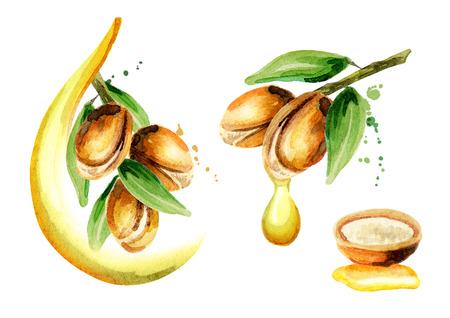 Set aus Arganöl-Kompositionen, kann als Designelement für die Dekoration von Kosmetik- oder Lebensmittelprodukten mit Arganöl verwendet werden. Handgezeichnete Aquarell Skizze Standard-Bild - 74556475