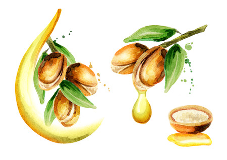 Set of argan oil compositions, can be used as a design element for the decoration of cosmetic or food products using argan oil. Hand-drawn watercolor sketch Фото со стока - 74556475