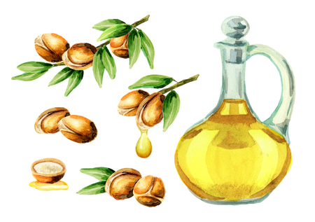 Hand drawn watercolor set of argan oil and a branch of nuts. Can be used as the elements for design of postcards, booklet, leaflet, banner or flyer cosmetic or food products