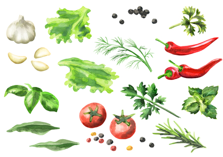 Watercolor set of spices and herbs, isolated on a white background Banque d'images