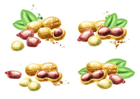 Hand drawn watercolor peanuts set