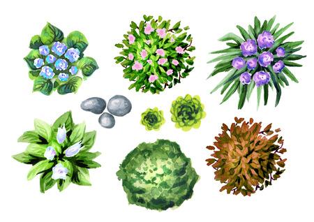 Garden flowers top view set. Watercolor
