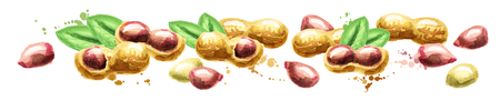 Panoramic image of peanuts on white background. Watercolor Stock Photo