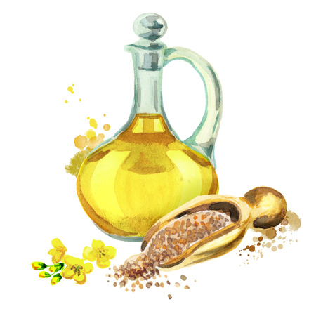 Mustard oil. Hand drawn watercolor Stock Photo