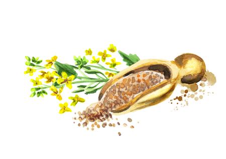 겨자 식물과 씨앗. 손으로 그린 수채화 물감 스톡 콘텐츠