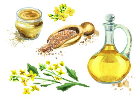 Senf mit Pflanze, Öl, Gewürz und Samen. Handgezeichnetes Aquarell