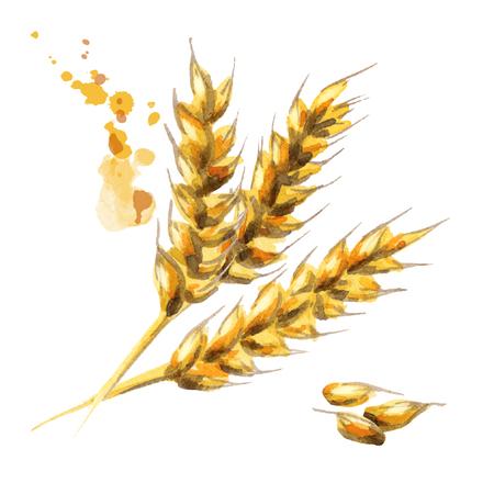 大麦。モルト。水彩 写真素材