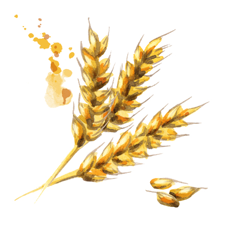 Barley. Malt. Watercolor 版權商用圖片