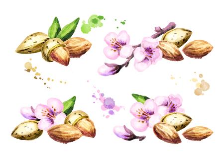 Almond compositions. Watercolor set