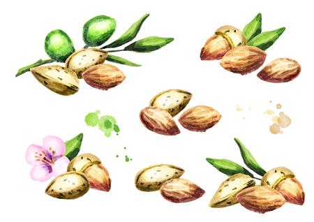 Almonds. Compositions. Watercolor set
