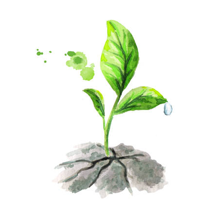 Green sprout breaks ground. Watercolor illustration