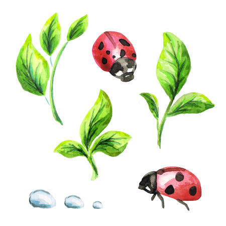morning dew: Green sprouts and ladybugs set. Watercolor illustration