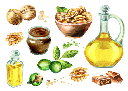 Walnut products set. Watercolor hand-drawn illustration