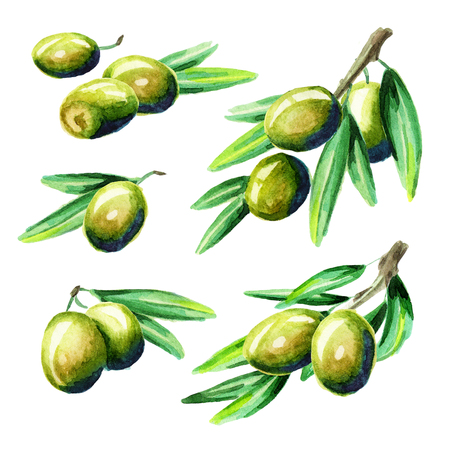 Olive set. Watercolor