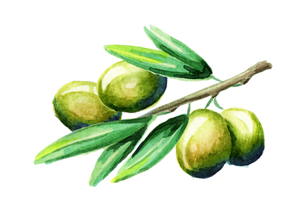 Olive branch. Watercolor