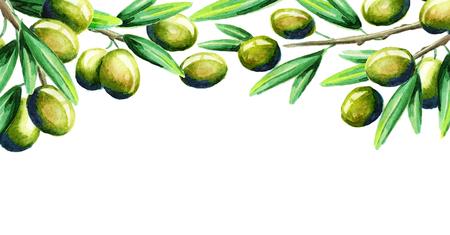 Modello di carta oliva. Acquerello Archivio Fotografico - 80203439