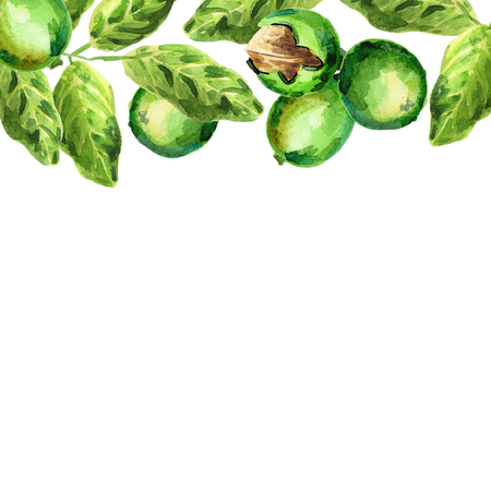 brain food: Walnut card. Watercolor hand-drawn illustration