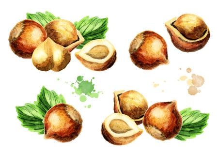 Hazelnut compositions set. Hand-drawn watercolor illustration