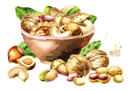 Bowl of nuts. Watercolor hand-drawn illustration 版權商用圖片