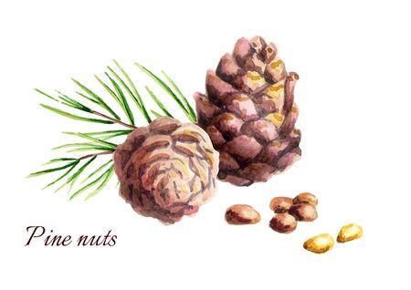 Dennenappels met noten. Aquarel illustratie