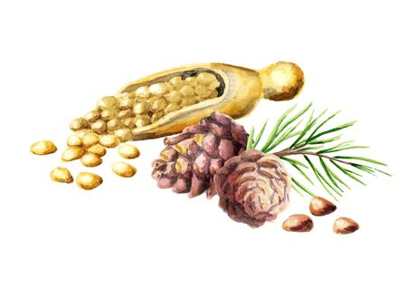 Pine nuts and cones. Watercolor hand-drawn illustration Stock Photo