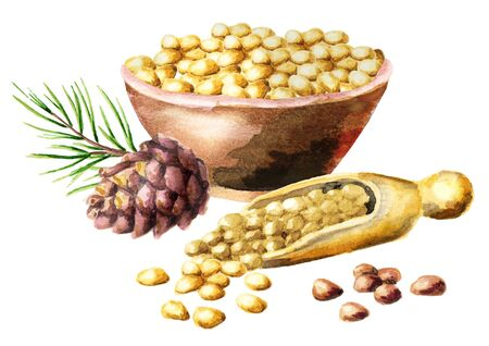 Bowl with cedar nuts. Watercolor hand-drawn illustration