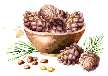 Bowl with pine lumps. Watercolor hand-drawn illustration Stock Photo