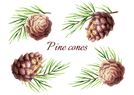 Pine cone set. Watercolor illustration