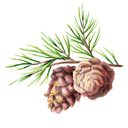 Pine cone. Watercolor hand-drawn illustration