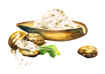 Shea butter. Hand-drawn watercolor illustration Stock fotó
