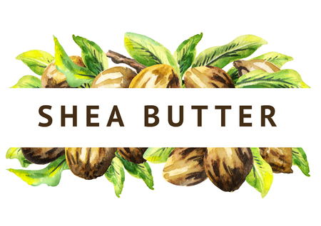 Shea nuts and green leaves background. Watercolor  illustration