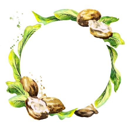 Shea-Nüsse und Grün verlässt kreisförmigen Hintergrund. Von Hand gezeichnete Illustration des Aquarells Standard-Bild - 83209480