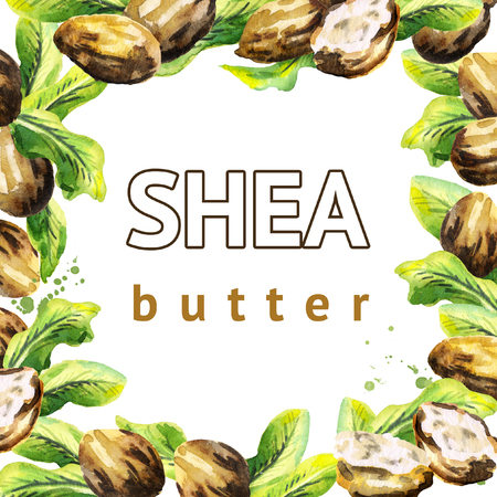 Shea nuts and green leaves square template. Watercolor hand-drawn  illustration