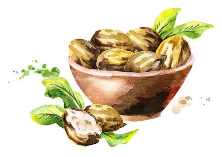 Bowl of shea nuts. Watercolor hand-drawn illustration