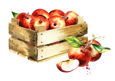 Box with apples. Watercolor Hand-drawn illustration Banco de Imagens