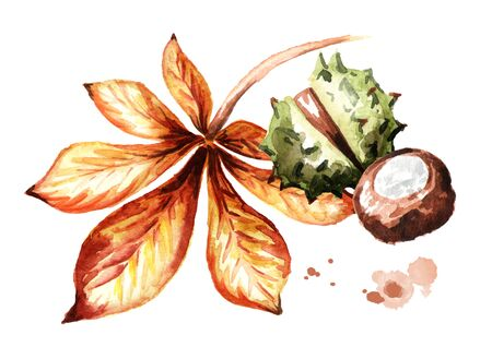 Autumn chestnut composition. Hand-drawn watercolor illustration