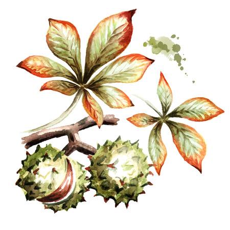 Autumn chestnut composition. Watercolor illustration