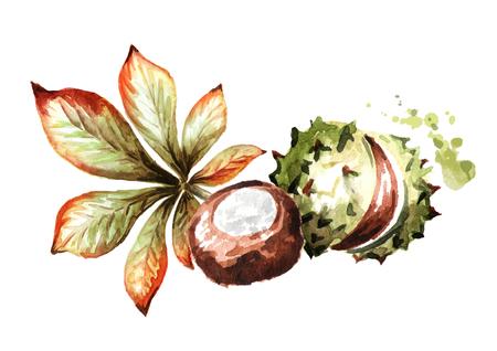 Autumn chestnut. Hand-drawn watercolor illustration