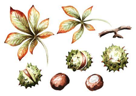 Chestnut set. Hand-drawn watercolor illustration