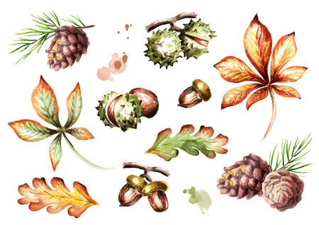秋の要素を設定します。水彩の手描きイラスト 写真素材