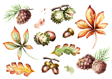 Autumn elements set. Watercolor handpainted illustration