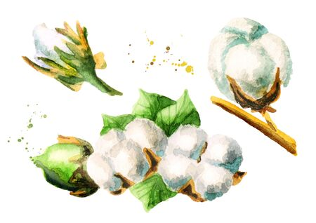 raw materials: Cotton set. Hand-drawn watercolor illustration