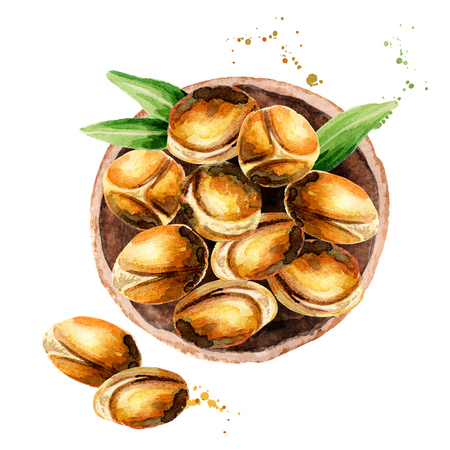 Plate of argan nuts, top view. Watercolor illustration
