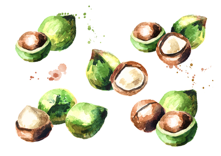 Macadamia nuts compositions set isolated on white background. Watercolor hand-drawn illustration Banco de Imagens