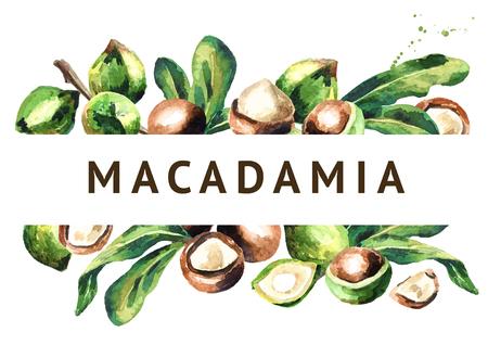 Macadamia noten en groene bladeren achtergrond. Waterverf illustratie